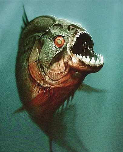 Cá Piranha ăn thịt người đang là mối đe dọa cho người dân dân ở những vùng miền có loài cá này