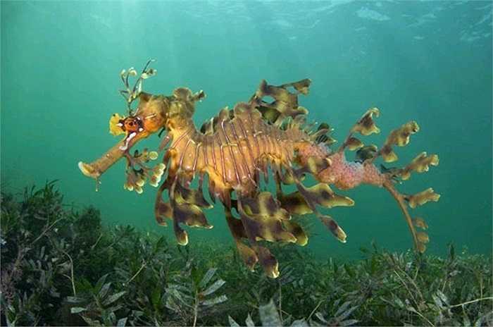 Một chú cá ngựa với hình dáng kỳ lạ