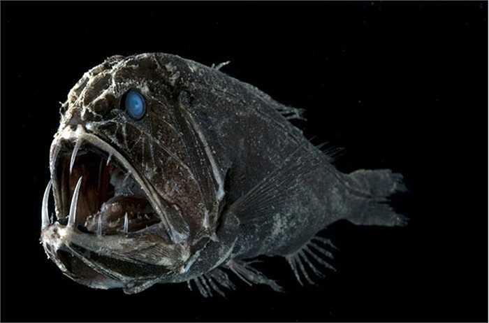 Cận cảnh một con cá có hình dáng đáng sợ sống ở độ sâu 2.600m dưới biển