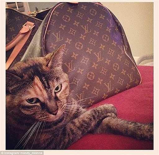 Không chỉ được sống trong những ngôi nhà thực sự tiện nghi mà còn được xài những thứ đồ hiệu đắt tiền, tương xứng với địa vị của chủ nhân.Mèo cưng bên cạnh chiếc túi xách hàng hiệu Louis Vuitton có màu sắc rất tông xuyệt tông với màu lông.
