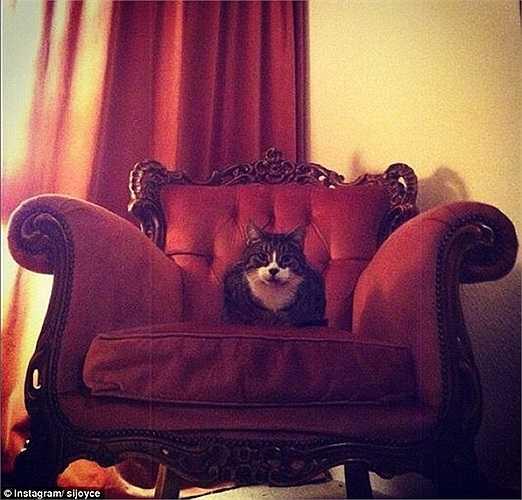 Nhìn ngắm thế giới từ 'ngai vàng' quyền uy của mình - một chiếc ghế cầu kỳ và êm ái.