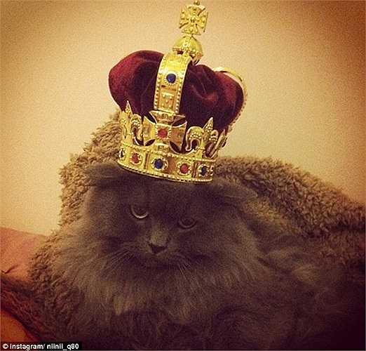 Vương miện dành cho Vua của các loài thú cưng.