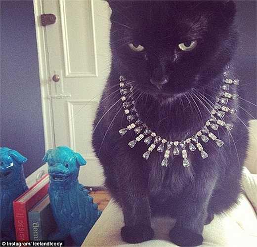 Chiếc dây chuyền hiệu Tiffany rõ ràng rất hợp với nàng mèo này và nó hoàn toàn biết cách biểu cảm gương mặt sao cho đúng chất đại gia lạnh lùng nhất