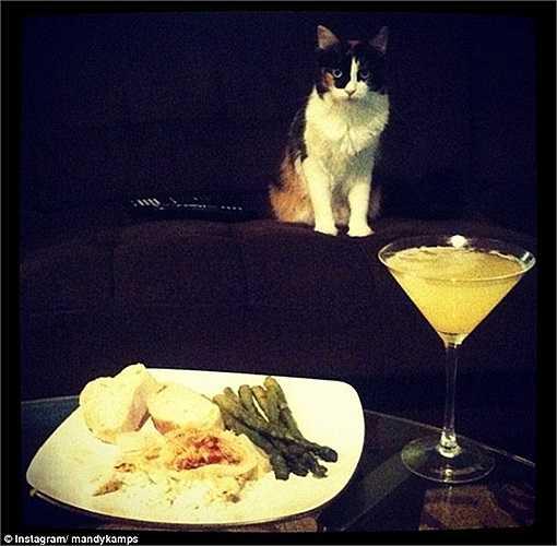 Bữa ăn sáng của chủ nhân với rượu martini và chắc chắn đồ ăn thức uống dành cho mèo cưng cũng thuộc dạng 'đắt xắt ra miếng'.