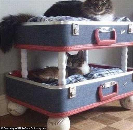 Thiết kế độc đáo dành cho nơi nghỉ ngơi của mèo.