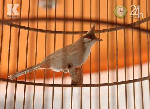 Từ lâu, chim cảnh vốn được coi là thú chơi dân dã, phù hợp với nhiều đối tượng. Số lượng loài chim cảnh khá đa dạng và phong phú. Tuy nhiên, người ta chia chúng thành 3 loại chính: chim cảnh, chim hót và chim đá.(Theo Khampha)