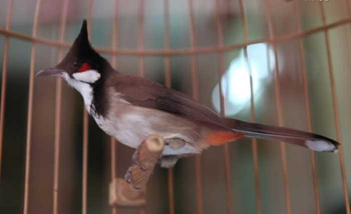 đặc biệt là phải có cám hạt để chim không bị mất màu.
