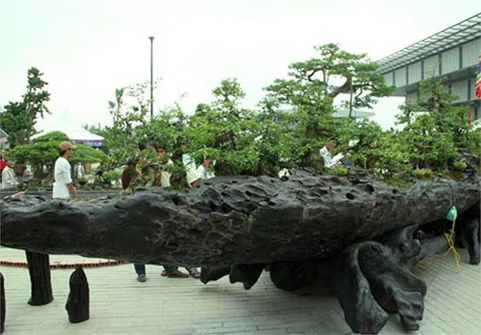 Chiến thắng Bạch Đằng: Những cây tùng trong bộ tác phẩm 'Chiến thắng Bạch Đằng' của doanh nghiệp Gia Phạm (Hải Phòng) trồng trên thân cây gỗ sáo đen được định giá hơn 70 tỷ đồng bởi sự mới lạ và sáng tạo.