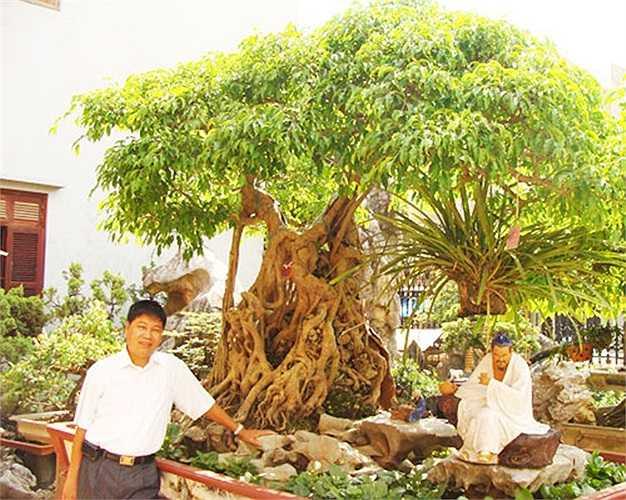 Ông bụt:Là cây tùng có tuổi đời hơn 500 năm, thuộc sở hữu của Phạm Văn Toàn (Toàn đôla) ở Việt Trì, Phú Thọ. Cây còn được gọi là đại cổ tùng, liệt vào hàng có một không hai trong làng sinh vật cảnh Việt Nam. Cây được định giá 1,2 triệu USD.
