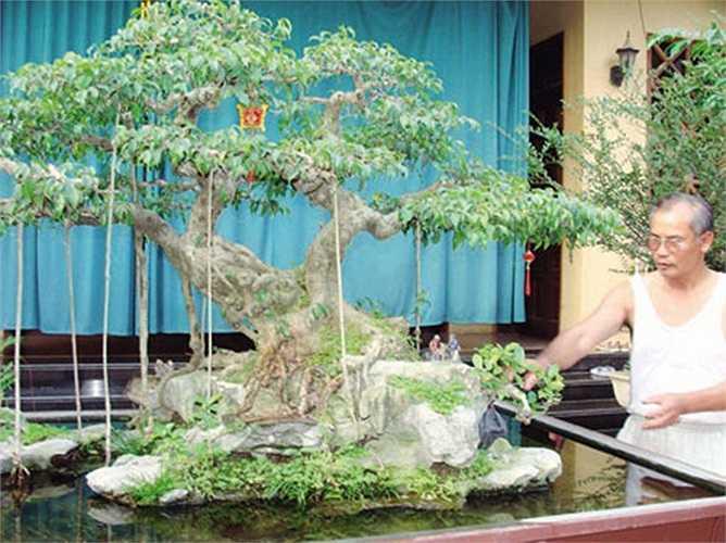 Cây sanh có dáng Phu thê này thuộc sở hữu của ông Nguyễn Gia Hiền (Triều Khúc, Hà Nội). Tính đến giai đoạn hiện tại, cây sanh đã có tuổi đời hơn 100 năm.