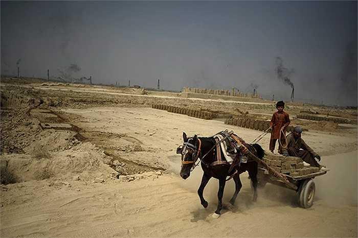 Những người lao động cưỡi xe lừa tại nhà máy sản xuất gạch ở Kabul, Afghanistan