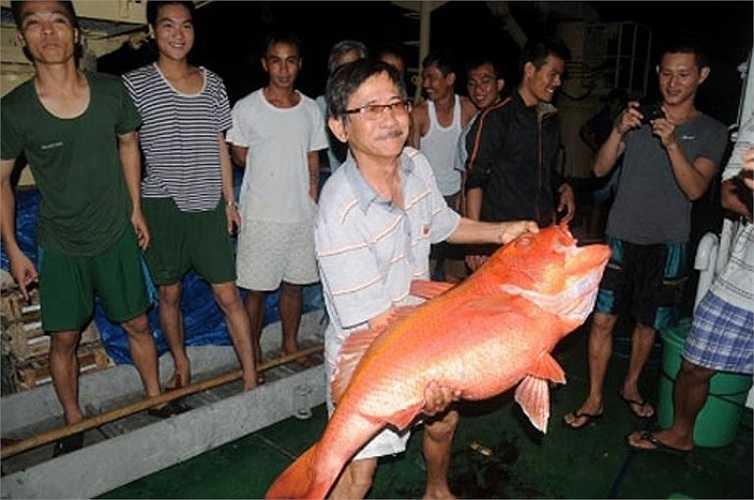 Ngoài số lương thực, thực phẩm được tiếp tế từ đất liền, các cán bộ, chiến s còn đánh bắt được rất nhiều cá to, tăng gia sản xuất rau xanh.