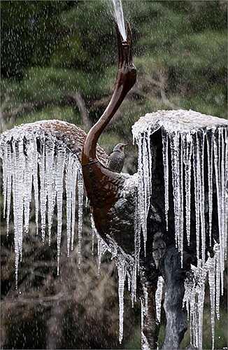Tượng con chim hạc phun nước bị đóng băng tại một công viên ở Tokyo