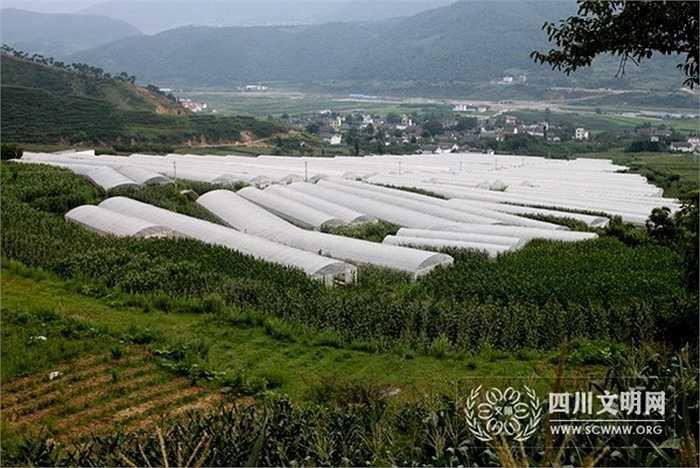 Truyền thông Trung Quốc nói 15 năm trước, 1/5 những ngôi nhà trong làng Hoa Tây được lợp bằng lá