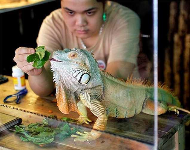 Pet Cafe là quán cà phê có nhiều loài bò sát nhất Hà Nội nằm trên phố Ngọc Khánh, quận Ba Đình. Chủ quán là Nguyễn Minh Nghĩa