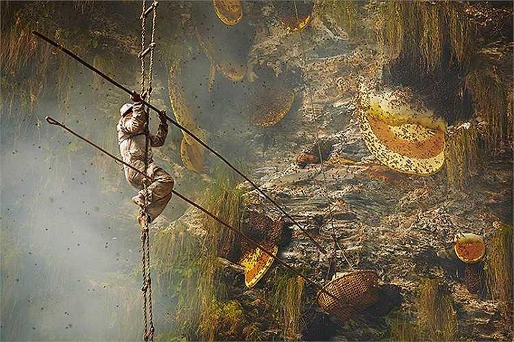 Các tổ ong nằm trên những vách đá dựng đứng, không thể tiếp cận mà không dùng thang dây