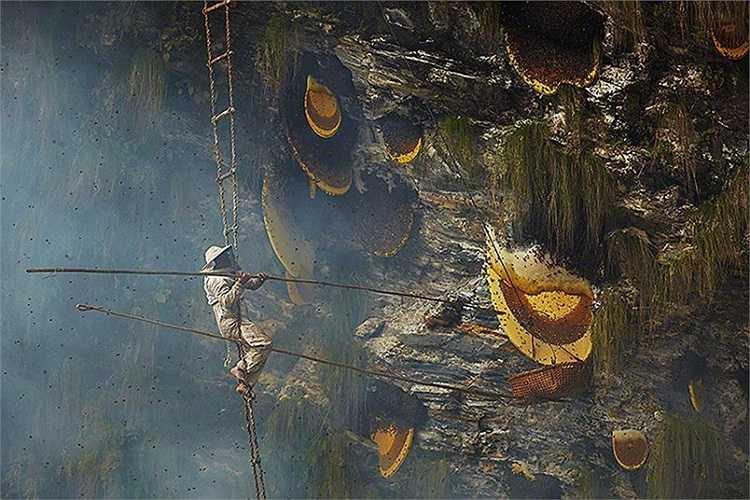 Những người thợ dùng 2 chiếc gậy, 1 để điều khiển giỏ hứng, một gắn dao nhọn để cắt các miếng mật ong