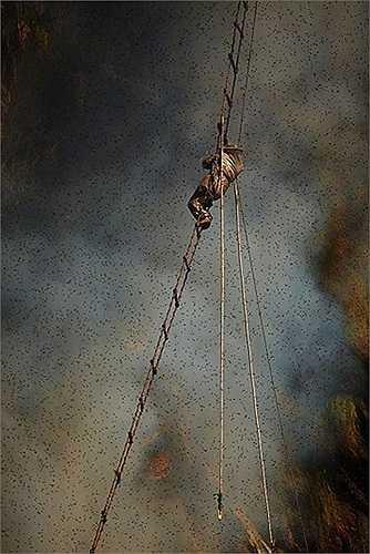 Những người thợ săn đu mình trên thang dây trong khi đợi khói hun lên, đuổi lũ ong đi xa