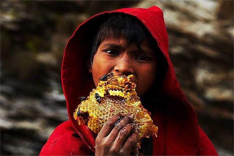 Cậu bé ăn miếng tổ ong có mật ngon lành