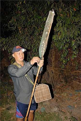 Đồ nghề săn nhái là cây vợt lưới dầy, cán vợt được làm bằng thân cây trúc to bằng ngón dò cái và có chiều dài hơn 2m.(Theo Zing)
