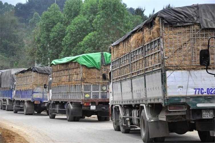 Xe chở dưa may mắn thông quan thì số dưa bị thương lái Trung Quốc trả lại cũng không ít, vì cuống dưa để lâu ngày đã bị héo. Có xe còn bị trả lại hàng tấn.