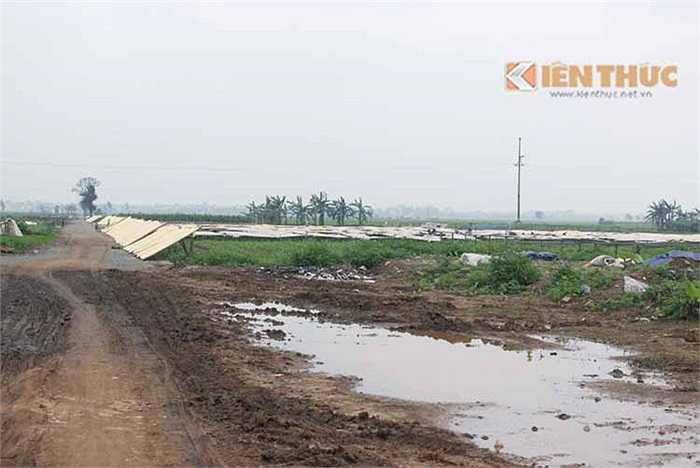 Là một trong những nơi cung cấp sản lượng miến lớn nhất cả nước, miến dong xã Dương Liễu (Hoài Đức, Hà Nội) đang có nguy cơ mất an toàn thực phẩm bởi người dân phơi miến tràn lan trên mặt đường giao thông