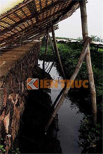 Nhiều người dân xã Dương Liễu đã tận dụng mọi nơi để có được chỗ phơi miến mà không cần quan tâm đến vệ sinh an toàn thực phẩm.