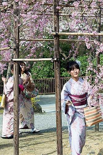 Các thiếu nữ Nhật tạo dáng bên hoa với những bộ Kimono truyền thống