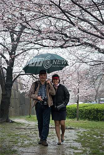 Ở Nhật Bản thời tiết mùa này thay đổi liên tục trong ngày, có những lúc mưa rất to nhưng không ngăn được các vị khách ghi lại những khoảnh khắc tuyệt vời bên hoa anh đào.