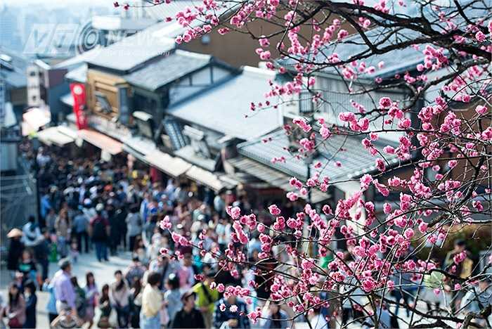 Mùa hoa anh đào nở rộ cũng là mùa chứng kiến sự mến mộ của nhiều người từ khắp nơi trên thế giới đến chia vui với người dân Nhật.