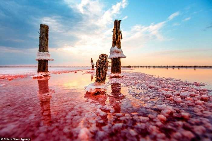 Các mảng muối bám vào cọc gỗ
