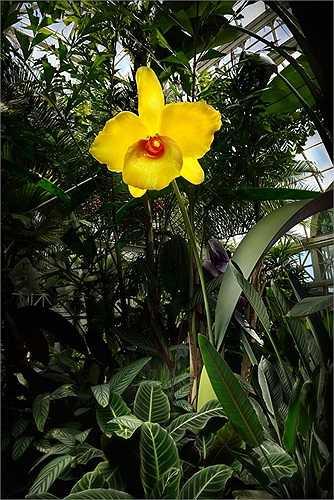 Mỗi bông hoa kính được tạo nên từ hàng trăm giờ miệt mài lao động sáng tạo của Jason Gamrath. Trước đó, anh dành hẳn 6 tháng để nghiên cứu về các loài phong lan.