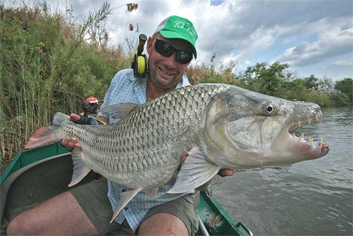 Chúng thực sự là sát thủ kinh hoàng trên những con sông ở Congo.