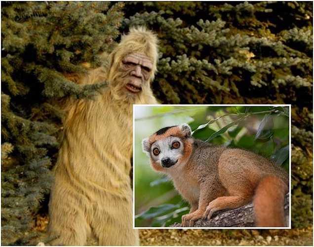 Bác sĩ thú y Melba Ketchum nghiên cứu về Bigfoot phát hiện ra rằng ADN trong ti thể của Bigfoot giống ADN của con người. Nhưng ADN trong nhân tế bào của Bigfoot lại giống của loài vượn cáo.
