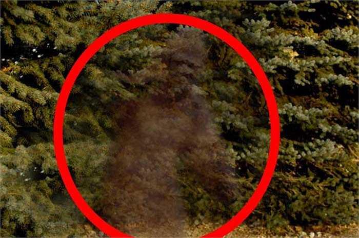 Nhiều người cho rằng họ thực sự nhìn thấy Bigfoot xuất hiện trong các khu rừng rậm. Tuy nhiên chúng có thể biến mất trong tích tắc như thể có khả năng tàng hình.