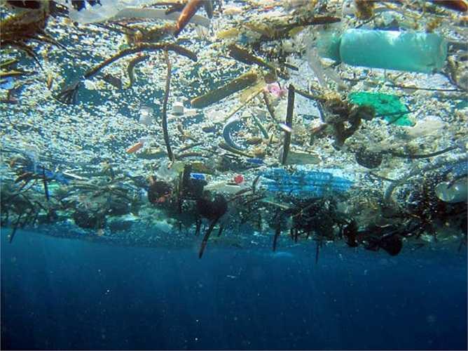 Con người đang xả rác tới mọi ngóc ngách hành tinh: Trong cuộc khảo sát bằng tàu ngầm tới các đại dương, chuyên gia cho biết rác được tìm thấy cả ở độ sâu 5 km. Hầu hết, con người chưa khám phá tới độ sau như vậy nhưng thật sốc khi sự ô nhiễm đã tràn xuống tận đây.