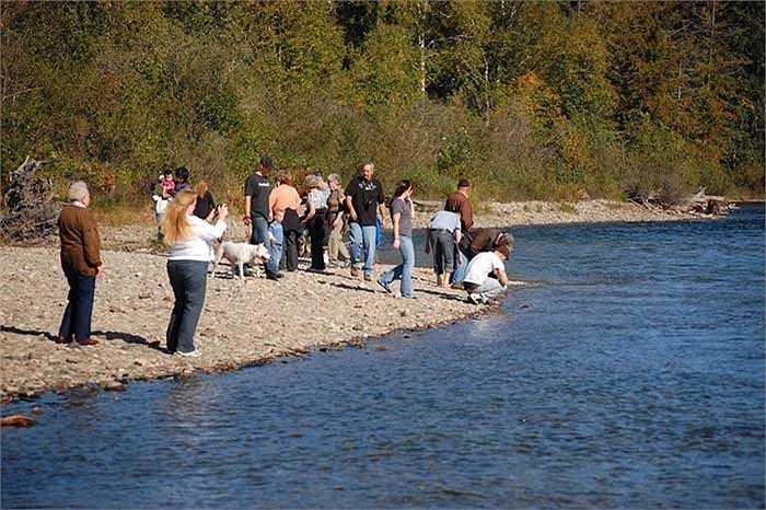 Hiện hàng chục ngàn người đã đổ về những khu vực ven sông Adams để chứng kiến cuộc di cư lịch sử của loài cá có tập tính kỳ lạ và bí ẩn nhất thế giới này, đó là cá hồi đỏ.