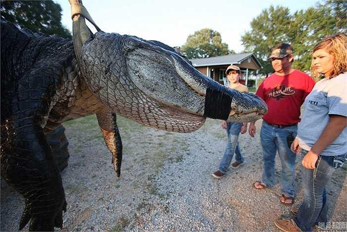 Đuôi cũng có thể được sử dụng như một vũ khí phòng thủ khi cá sấu cảm thấy bị đe dọa