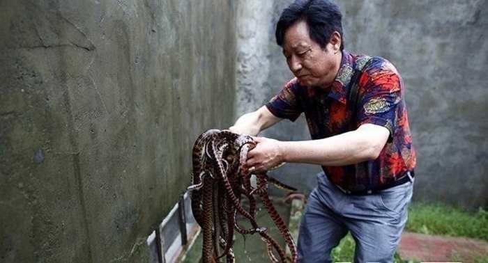 Nhung nhúc rắn ở làng Tử Tứ Kiều