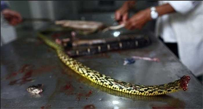 Tuy nhiên, từ khi họ chuyển sang nghề nuôi rắn thì cuộc sống của các hộ dân trong làng khá giả hơn
