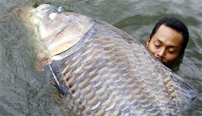 Sông Mê Kông có nhiều loài cá khổng lồ, nặng hàng tạ, gồm cá chép Xiêm (còn gọi là cá hô, chép đen) cá tra dầu, đuối, cá vồ cờ… Tuy nhiên, giới cần thủ rất thích thú với việc săn cá chép Xiêm.