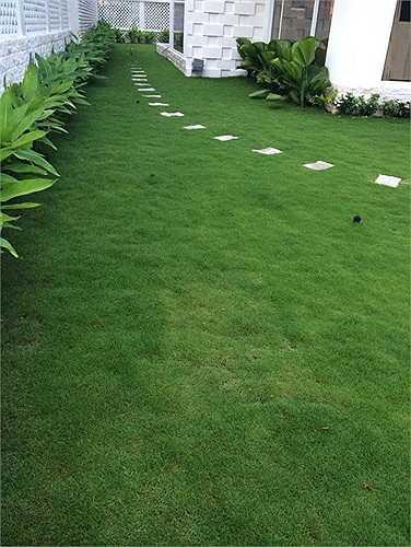 Thảm cỏ xanh mướt bao bọc quanh nhà.
