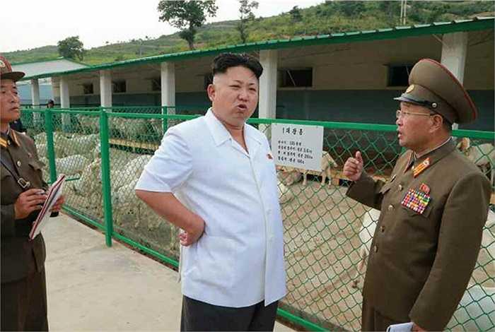 Trong chuyến thị sát, ông Kim hạ chỉ thị yêu cầu vỗ béo gia súc