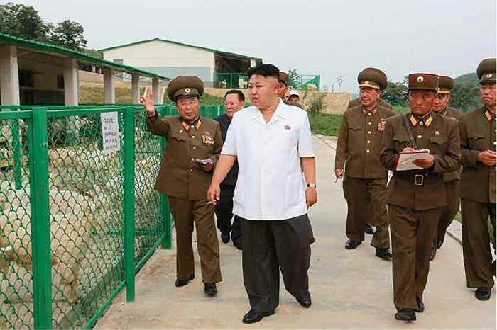 Ông Kim Jong-un cùng các tướng lĩnh quân đội tại trang trại chăn nuôi số 621 hôm 21/8