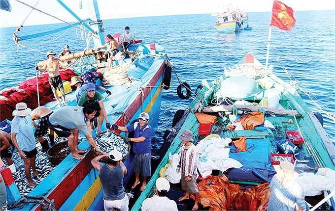 Các tàu vừa vây được mẻ cá, tàu hậu cần liền được gọi đến và mua ngay khi lưới vừa được kéo lên. Một ngày đêm quần quanh một khu vực rộng lớn, tàu hậu cần này mua được hơn 7 tấn cá từ các tàu đánh bắt.