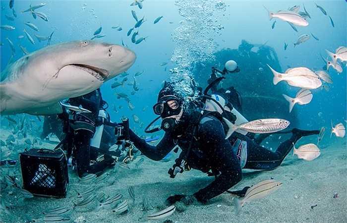 Nhiếp ảnh gia tiếp cận sát cá mập