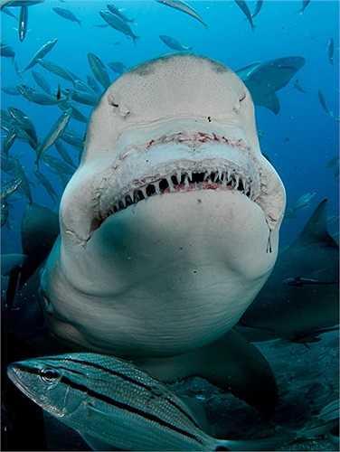 Hàm răng sắc nhọn, lởm chởm của các mập