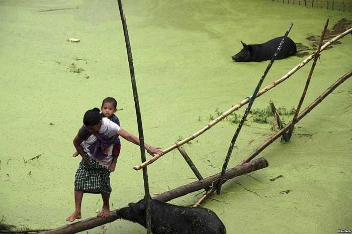 Một người dân làng cõng một em nhỏ đi qua cây cầu tre tạm bợ để vượt qua chỗ bị ngập lụt ở huyện Jorhat, bang Assam đông bắc Ấn Độ