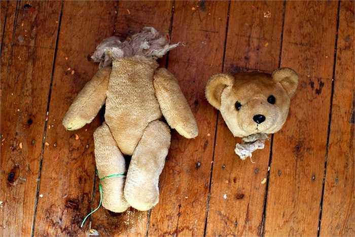 Một chú gấu bông bị hỏng đang chờ được phẫu thuật