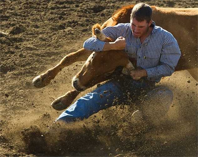 Người đàn ông vật đổ bò tót ở Walla, Washington